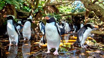 New Zealand: Earth's Mythical Islands - 1. Cast Adrift