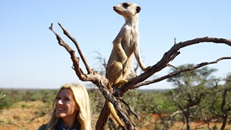 Naomi's Nightmares Of Nature - Series 4: 2. Kalahari Safari