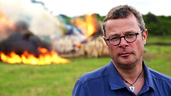 Saving Africa's Elephants: Hugh And The Ivory War - Episode 1
