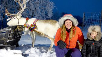 My Pet And Me - Arctic Animals