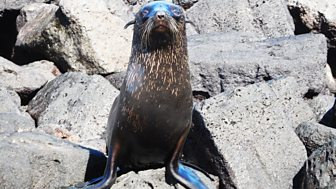 My Pet And Me - Galapagos Special: 5. Animals Of Fernandina