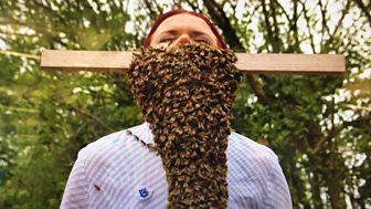 Blue Peter - Beard Of Bees!