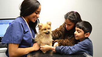 The Pets Factor - Series 1: 4. Tilly, Pretzel, Bambi And Jasper
