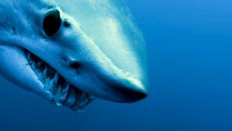 Shark Bites - Series 1: 1. Mako Shark