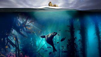 Blue Planet Ii - Series 1: 1. One Ocean