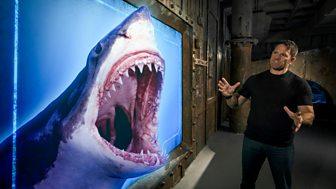 Shark Bites - Backshall's Best Shark Bites