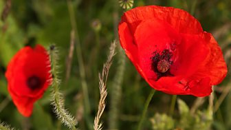 Two Minutes Silence - Remembrance Day - 11/11/2017