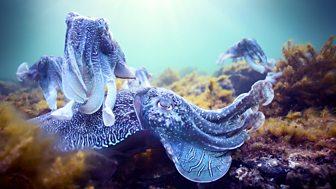 Blue Planet Ii - Oceans Of Wonder