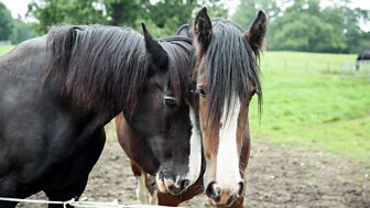The Farmers' Country Showdown - Series 2: 8. Shire Horses