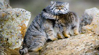 Big Cats - Series 1: Episode 2