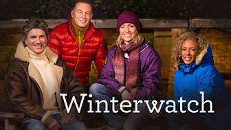 Winterwatch - Series 6: Episode 1