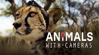 Animals With Cameras - Series 1: Episode 1