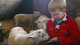 Ferne And Rory's Vet Tales - Series 1: 9. Sheep Farm