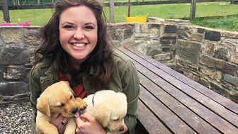 Ferne And Rory's Vet Tales - Series 1: 21. The Puppies