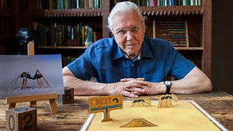David Attenborough's Natural Curiosities - Series 4: 4. Curious Counters
