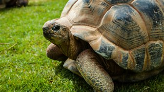 David Attenborough's Natural Curiosities - Series 4: 5. Incredible Shells