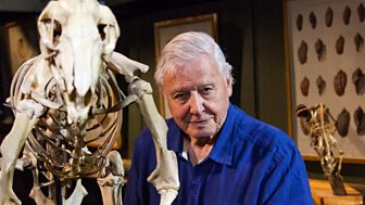 David Attenborough's Natural Curiosities - Series 4: 6. Ferocious Fighters
