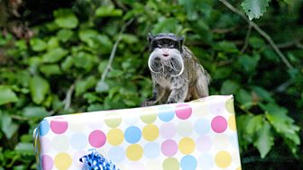 The Zoo - Series 2: 8. Happy Birthday To Zoo