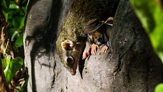 Andy's Safari Adventures - Series 1: 20. Andy And The Treeshrew