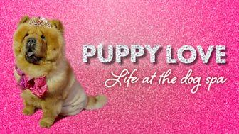 Puppy Love - Episode 09-07-2018