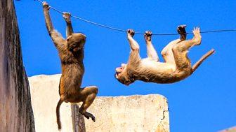Animals Behaving Badly - Series 1: 2. Hunger Wars