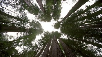 Programme image from Planet Earth: Episode 10: Seasonal Forests
