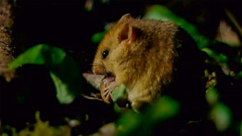 Programme image from Countryfile: The Blean