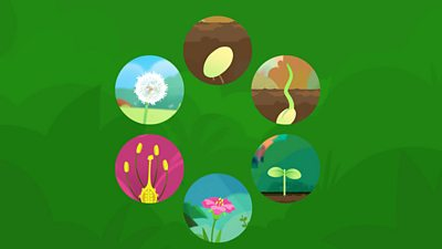The different stages of the life cycle of plant.