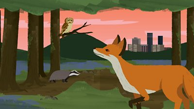 A fox looking at an owl and a badger in a woodland habitat.