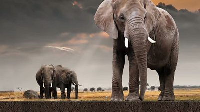 A picture of elephants