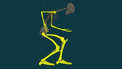 09 Human skeleton_Q2