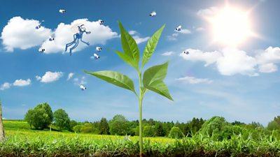 06 Plant systems_Q1.jpg
