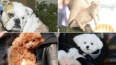 Quiz: Can you match these pets to their pop star owner?