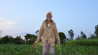 A farmer holds his crops in his hands in an Ethiopian field