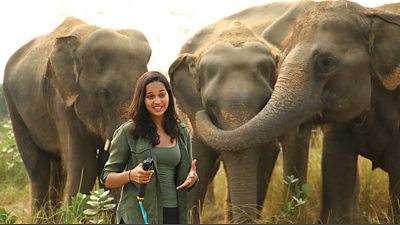 Malaika is speaking to camera and is standing in front of three large elephants