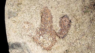Tyrannosaurus footprint