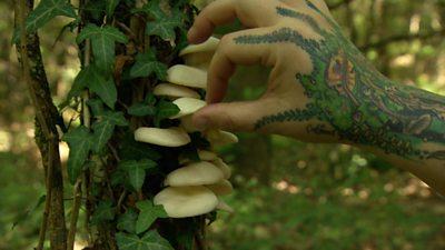 'Mushrooms are my muse'