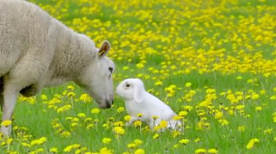 A rabbit and a sheep
