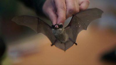 Bats in Belarus