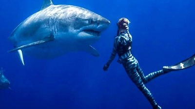Great white shark and diver