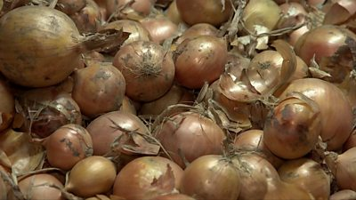The Netherlands' largest onion producer