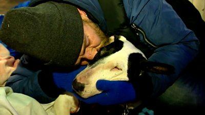 The street vets saving homeless pets