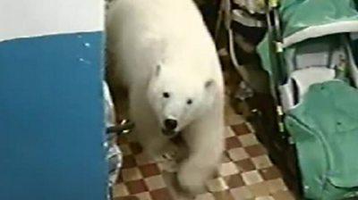 A polar bear enters a residential building