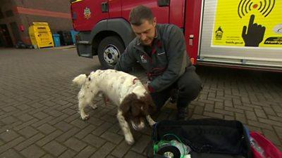 Fireman with dog