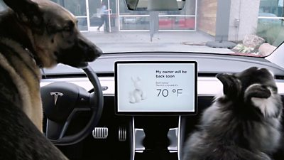 """Two dogs in a Tesla with """"dog mode"""" activated"""