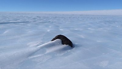 Space rock in Antarctica