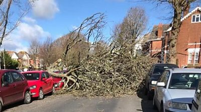 Fallen tree in Brighton