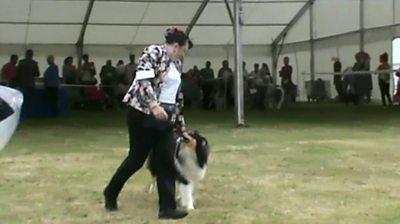 Linda Avery at a dog show