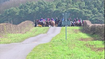 Horses at start of race