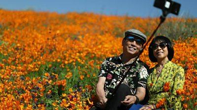 Rare super bloom stuns visitors in Southern California